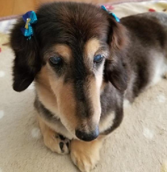 ペットサロンfオーナーの愛犬ペロ
